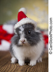 Little santa bunny on Christmas background - Bunny and...