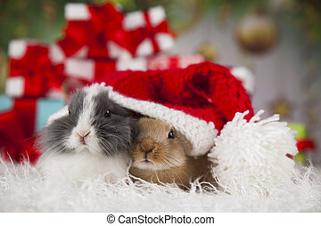Bunny with Rabbit, christmas red Santa hat on winter...