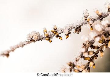 frost - winter