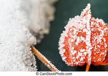 winter - frost
