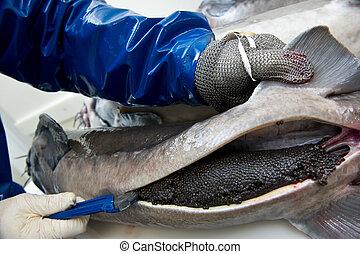 preparar, removendo, ovos, esturjão, caviar, femininas,...