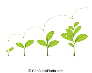 Phases Green Plant Growing.Vector