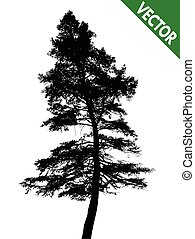Pine tree on a white background, vector illustration