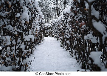 Christmas mysterious winter snowy road between the bushes -...