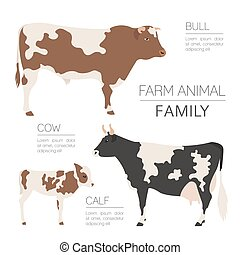 Cattle farming infographic template. Cow, bull, calf family. Flat design