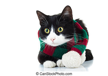 cat wearing knitted red and green scarf looks to side