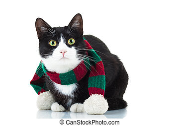cute cat wearing knitted christmas scarf