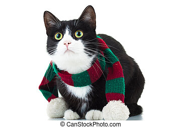 cat wearing christmas scarf is looking up