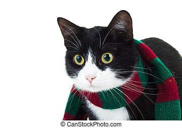 closeup picture of a cat wearing christmas knitted scarf