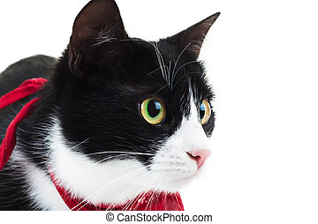 close up of a cute cat wearing red scarf