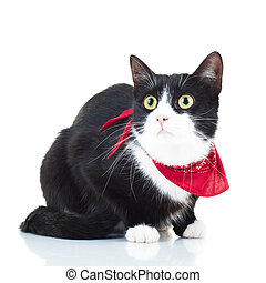 curious black and white cat wearing red scarf
