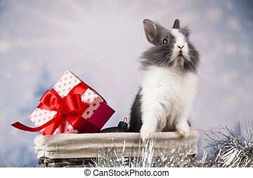 Holiday Christmas bunny in Santa hat on gift box background...