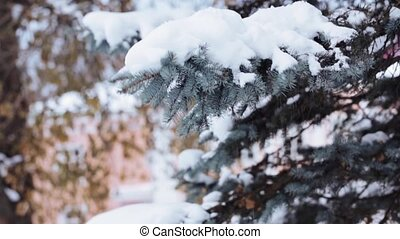 hand shaking snow from fir branch in winter forest - people,...