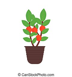 fruit tree in a pot isolated on white background with red...