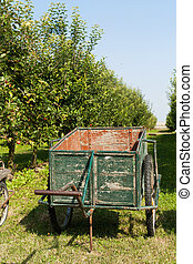 Wooden cart in orchard - Old cart to pick the apples in an...