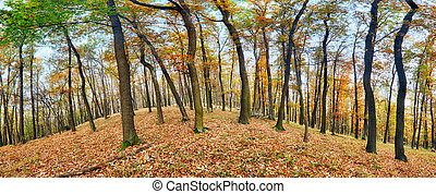 Forest panorama at autumn