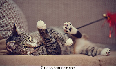 The striped cat on a sofa plays with a toy. - The striped...