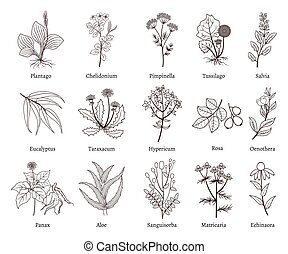 Medicinal herbs and plants doodle vector collection. Hand...