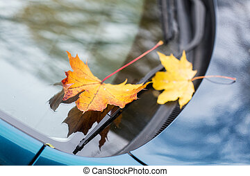close up of car wiper with autumn leaves - season and...