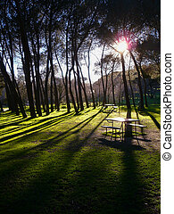 "Sunset in old park - Sunset in the park ""Casa de Campo"" in..."