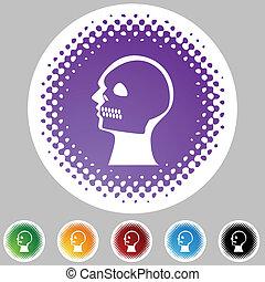 radiografía, cráneo