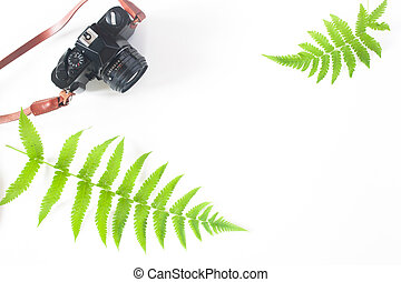 Flat lay of camera and fern leaves isolated on white...