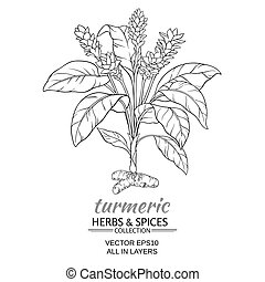 turmeric vector illustration - turmeric plant vector...