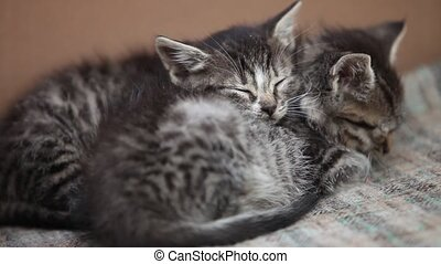 sleeping little kittens - sleeping little gray kitten close...