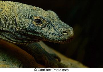 Komodo Dragon in profile