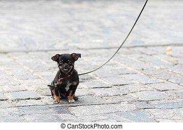 puppy dog on a leash