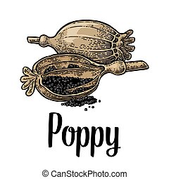 Poppy heads and seeds. Vector black vintage engraved
