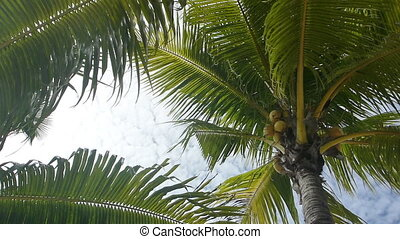Tropical green palm trees, overhead shot