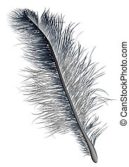 feather black  isolated on a white background