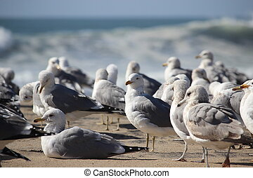 Flock of Seabirds - Seabirds