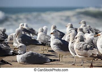 Flock of Seabirds - Seabirds