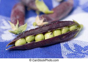Open marrowfat pea in blue - open marrowfat peas on blue...