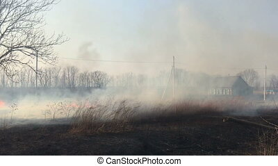 Fire in the field, burning dry grass.