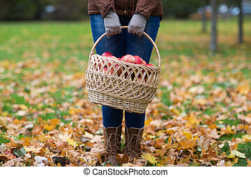 woman with basket of apples at autumn garden - farming,...