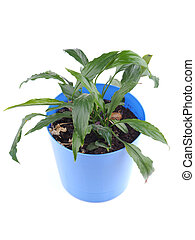potted plant on a white background