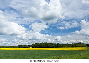 Estonian rural landscape. - Yellow rapeseed field and blue...