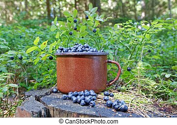 blueberries in forest