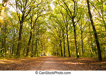 Dirt road with tree trunks in autumn, Netherlands