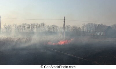 Fire in the field, burning dry grass