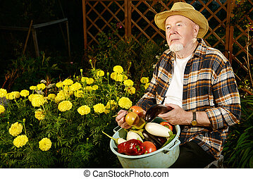 old man in a garden - Smiling senior man with his harvest in...