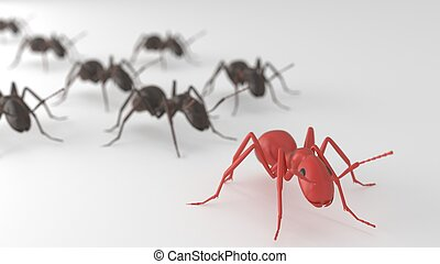 Red ant leading Black ants - ant leading other ants in...