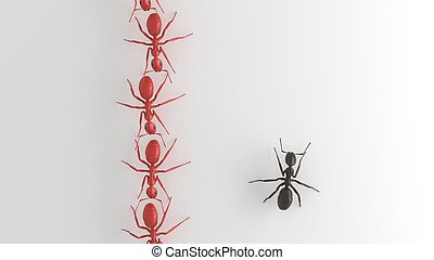 Black ant standing out from Red ants - ant different from...