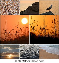 Seagull stands on a coastal stone in a sea sunset light....
