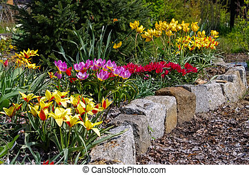 flowerbed with wild tulips