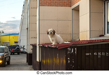 Dog in city went out of the window to get some air. - Dog in...