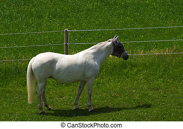 white horse standing on the pasture and green medow